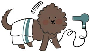 Legendary Labradoodles dog getting hair dried with hair blow dryer and blanket over back of dog and a comb over the head cartoon